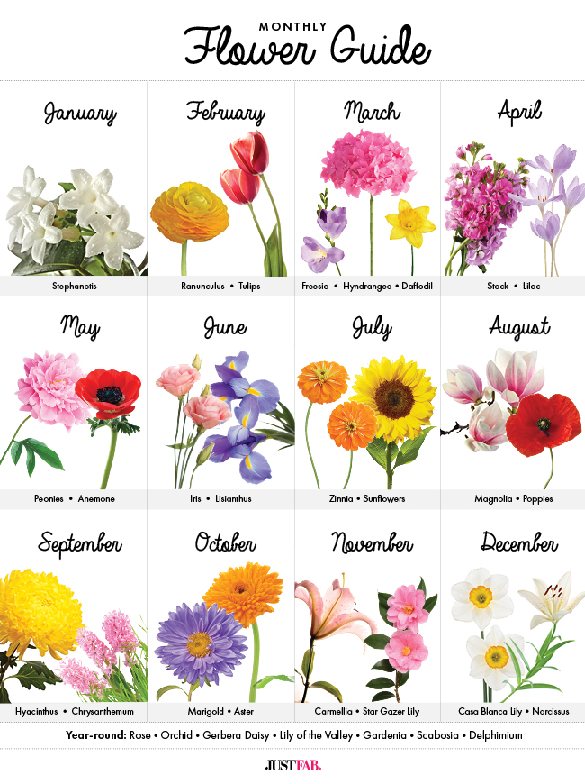 A visual guide to wedding flowers by month monthly flower guide a must have graph to learn whats in season junglespirit Images