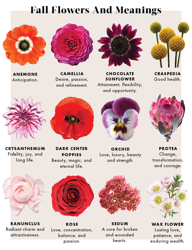 The meanings of fall flowers. | JustFab Blog